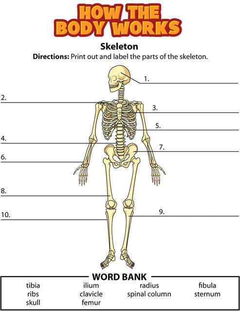 Sleleton clipart word Clipart Clipart 17 skelton Human