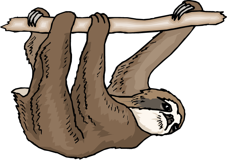 Drawn sloth hanging on tree Drawings Download clipart Download clipart