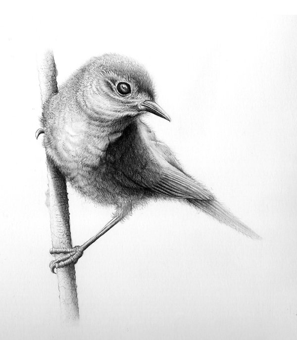 Small clipart pencil drawing Drawing small Bird of Google