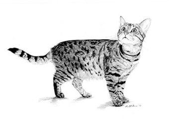 Small clipart pencil drawing Tabby drawing Print Cat Cat