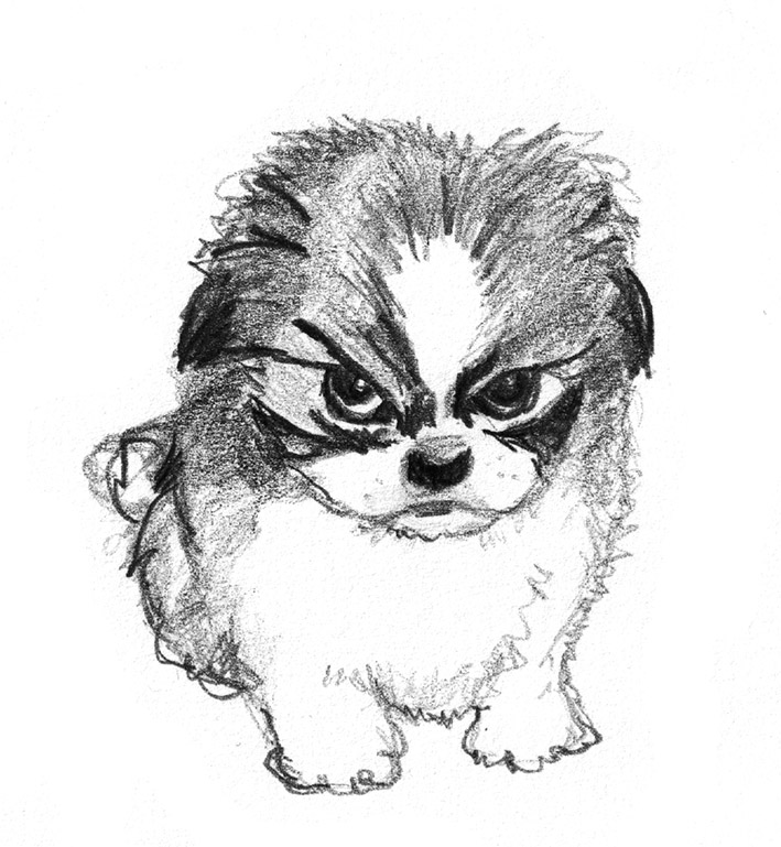 Sketch clipart pencil drawing Of dog small angry drawings