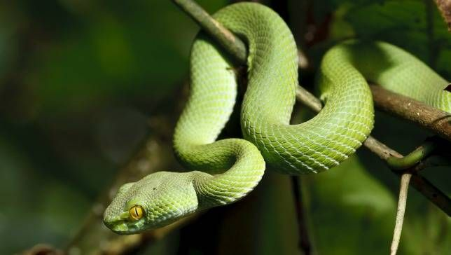 Smooth Green Snake clipart friendly What know about do