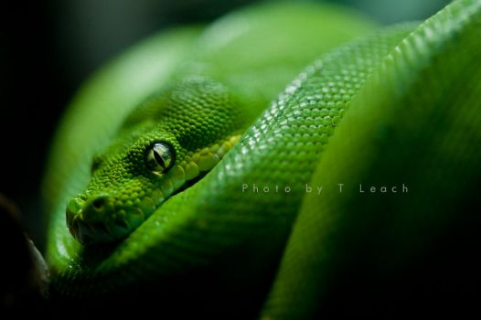 Smooth Green Snake clipart black and white Valkiria by DeviantArt 2 art