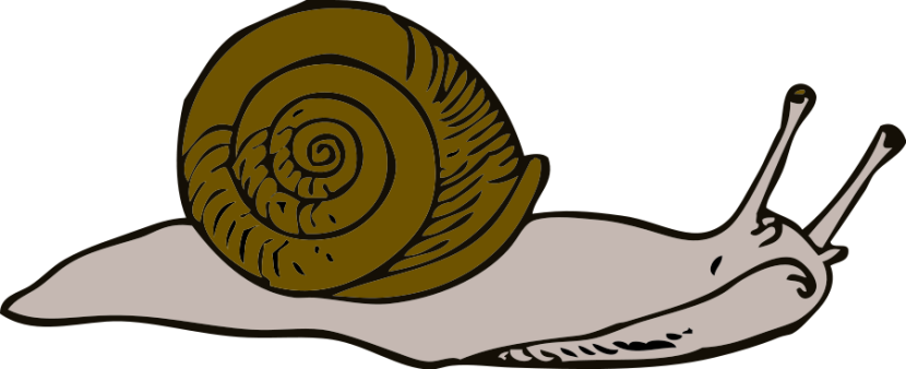 Red clipart snail #5