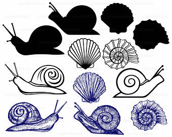 Mollusc clipart sea snail Snail svg snail snail snail