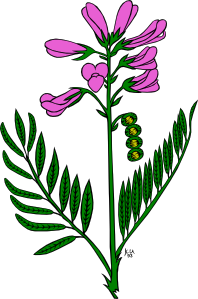 Snapdragon clipart #1