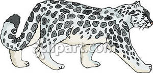 Snow Leopard clipart Clipart View Snow of a