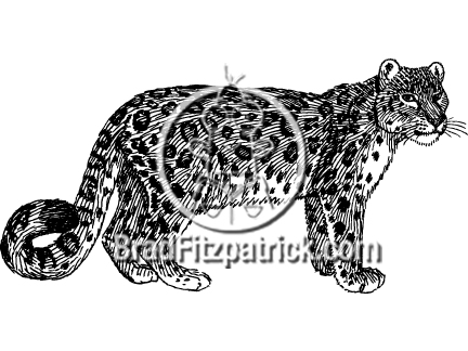 Snow Leopard clipart Art Leopard B&W White Art