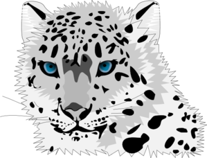 Snow Leopard clipart Com art Clip clip Leopard
