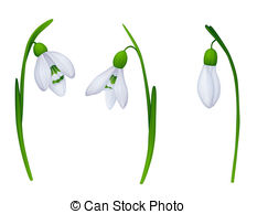 Snowdrop clipart White background Illustrations snowdrops 1