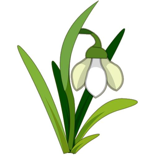 Snowdrop clipart Snowdrop (plant) Fandom Snowdrop Wikia