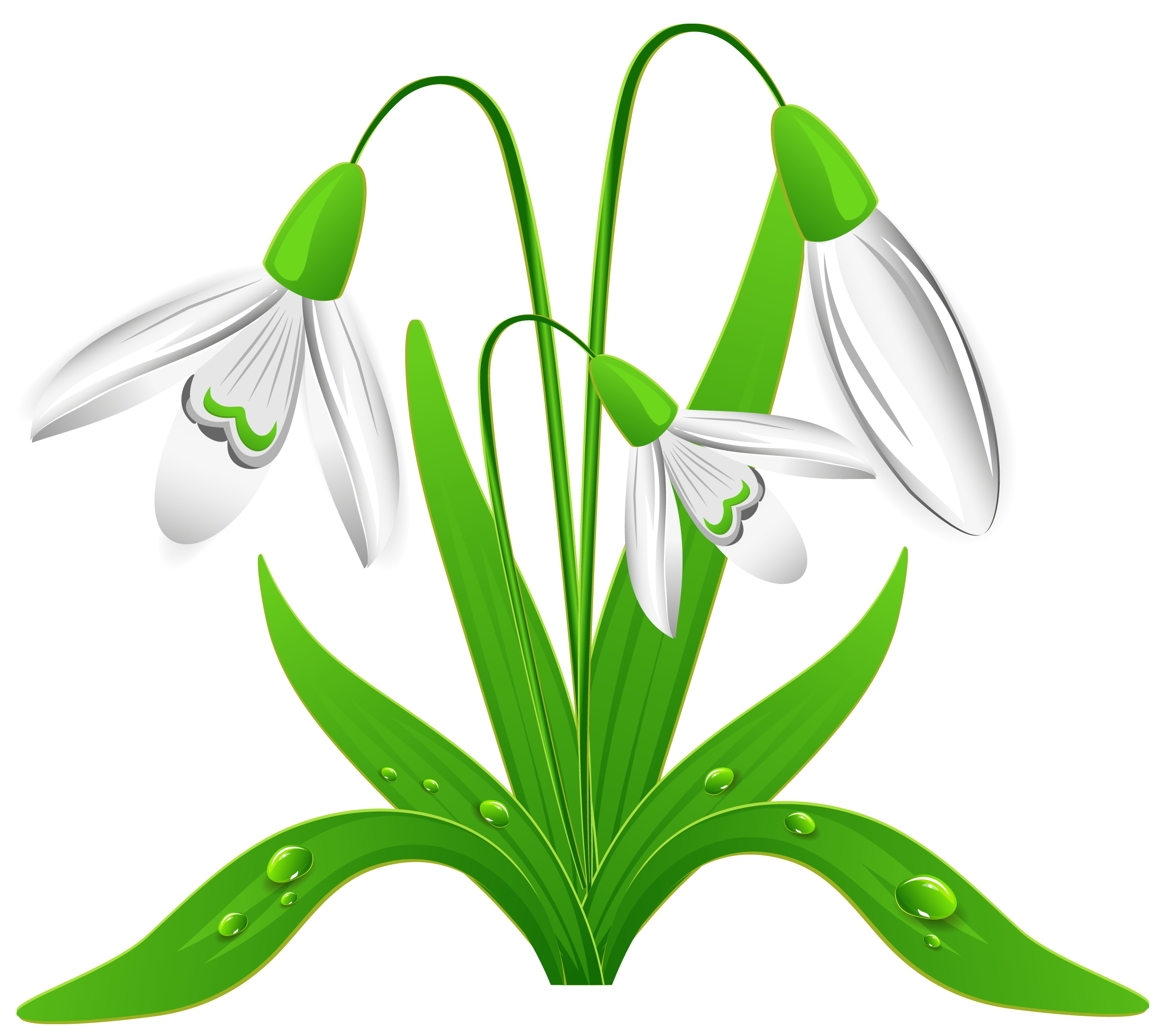 Snowdrop clipart Spring clipart pdclipart 1 spring