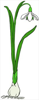 Snowdrop clipart Clipart Graphics and Clipart Free