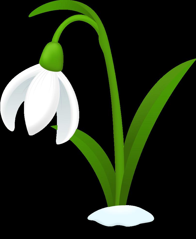 Snowdrop clipart Cliparts Clipart Flower Free Snowdrop