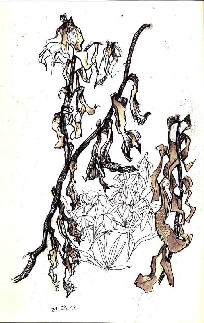 Snowdrop clipart dead flower Flowers Flower Drawing Flower Dead