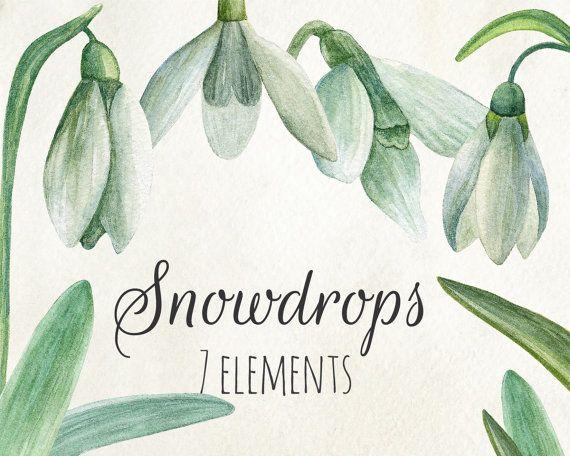 Snowdrop clipart dead flower Clipart clipart Watercolor Pastel arrangements