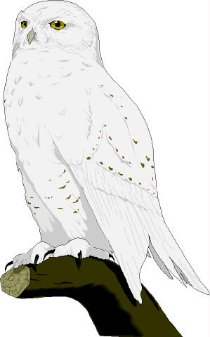 Burrowing Owl clipart snowy owl Clipart Download Snowy Snowy drawings