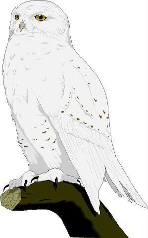 Snowy Owl clipart Clipart clipart Snowy Snowy Snowy