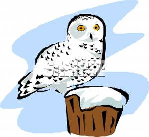 Snowy Owl clipart Clipart flying%20snowy%20owl%20clipart Panda Images Clipart