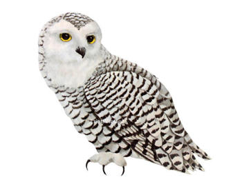 Snowy Owl clipart Owl Image Download Snowy Art