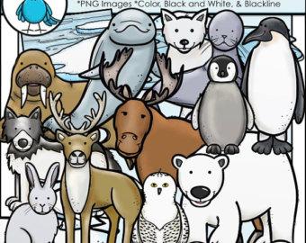 Arctic clipart adaptation Animals Clip Art and Etsy