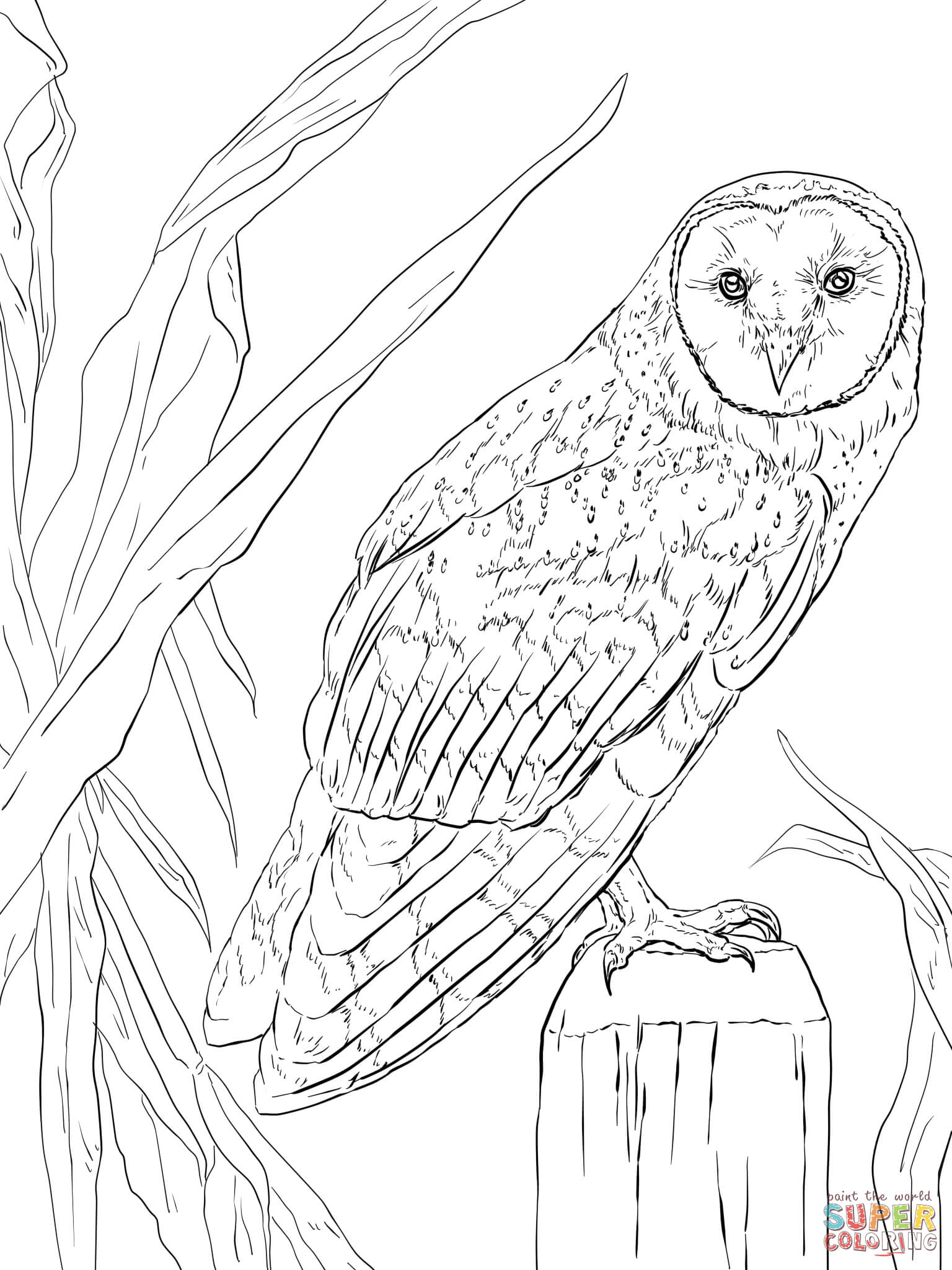 Barn Owl clipart nocturnal animal Page Owl Coloring Free coloring