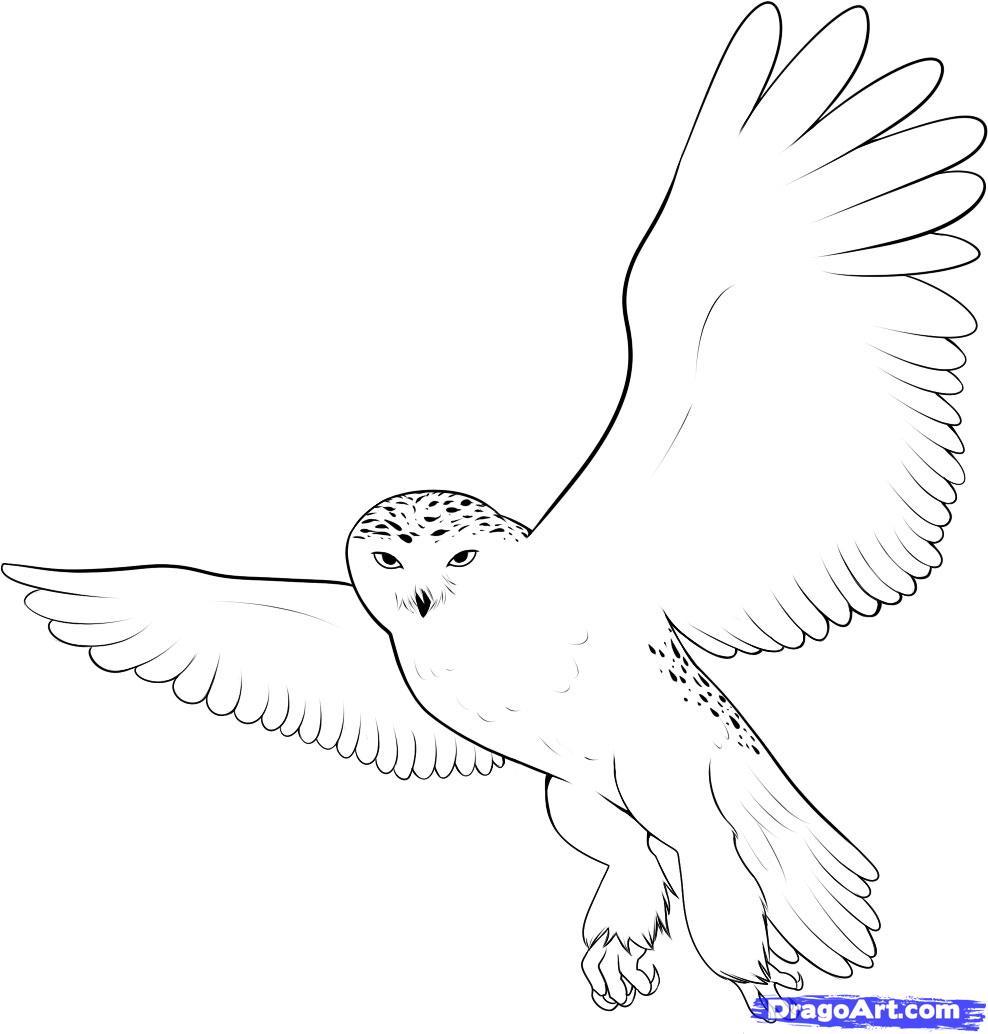 Drawn owl snowy owl #3
