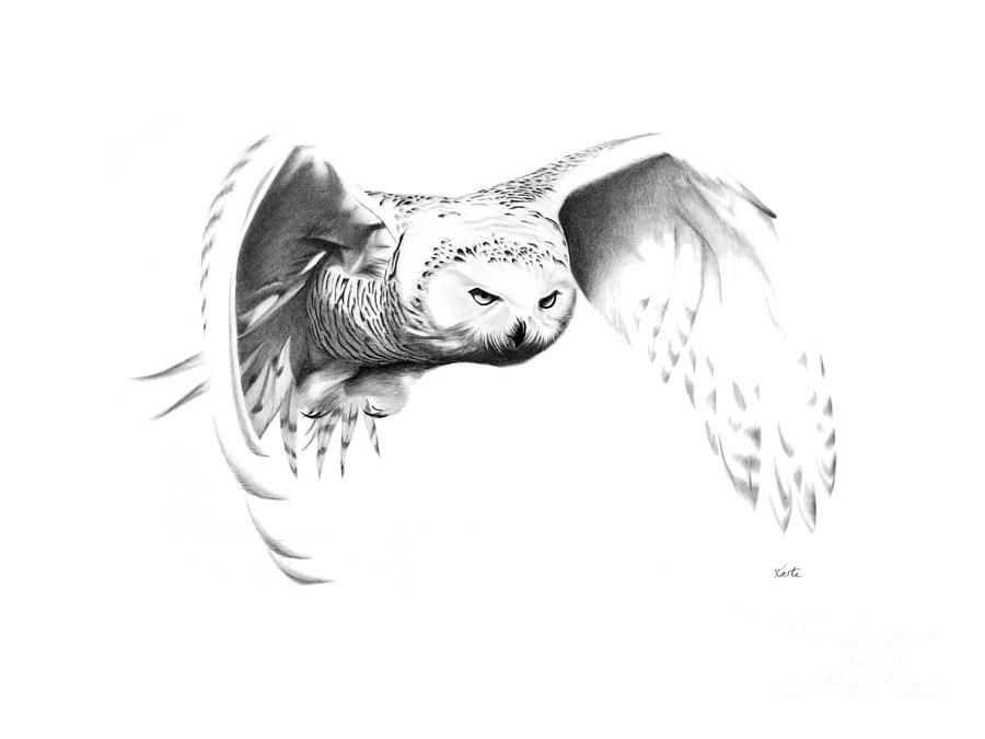Drawn owl snowy owl #4