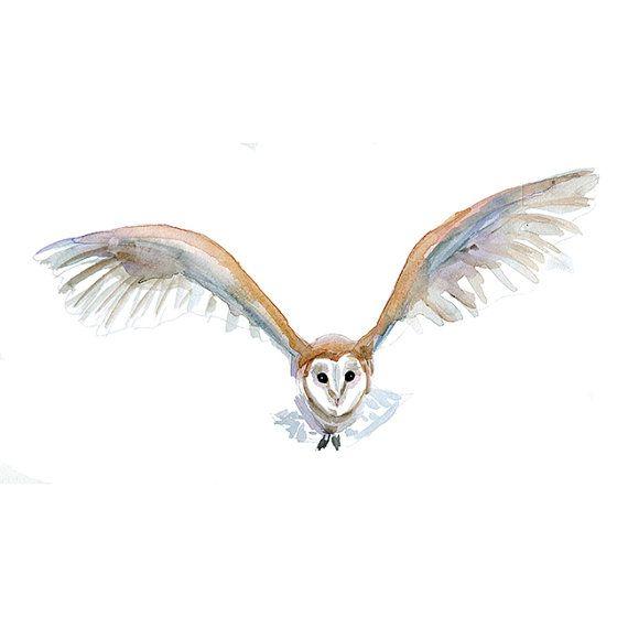 Bird Of Prey clipart barn owl On Barn Waterverf kunst Uil