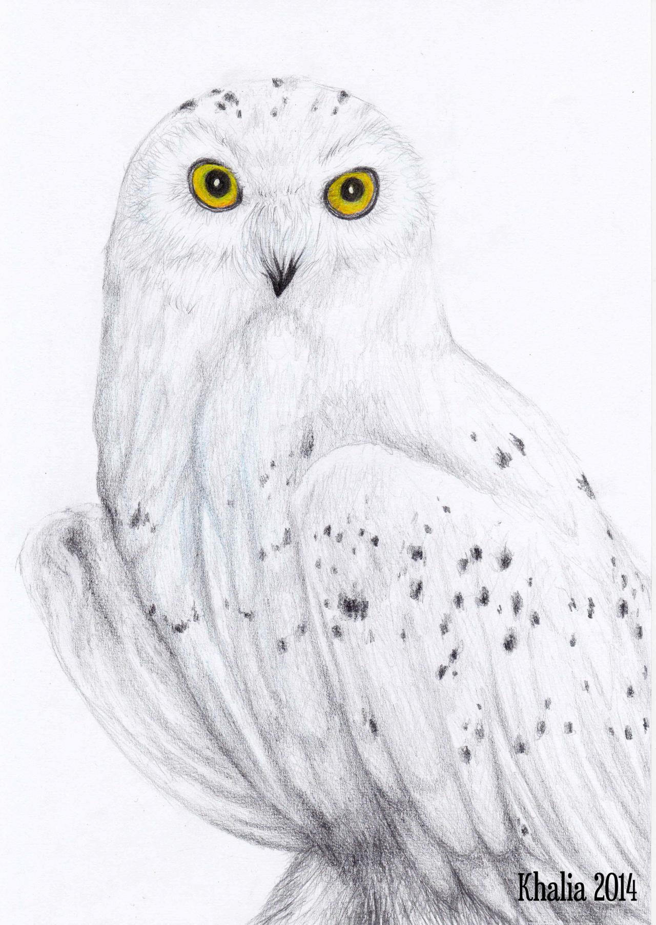 Drawn owl snowy owl #5