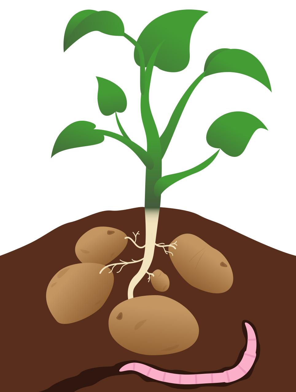Soil clipart plant Clip clip Plants art com