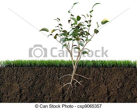 Soil clipart plant Picture plant section in Stock