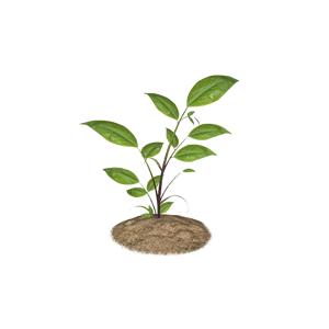 Soil clipart plant Clipart Soil Soil Plant (wmf