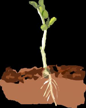 Soil clipart plant Clipart in art soil 2