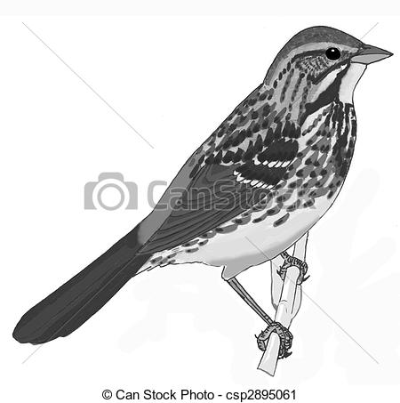 Song Sparrow clipart Song Sparrow melodia Art Song