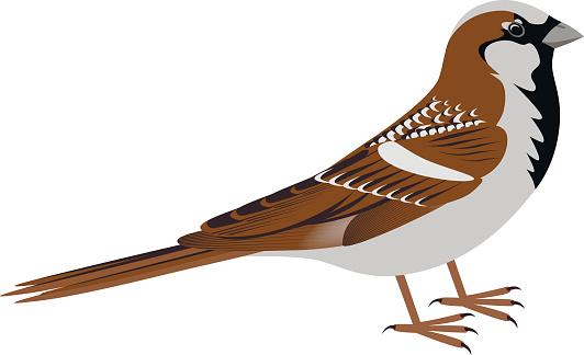 Sparrow clipart Black Sparrow And Sparrow White