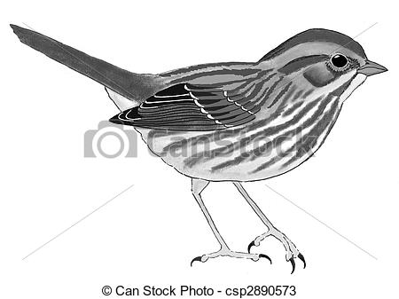 Song Sparrow clipart Clipart drawings clipart Sparrow Download