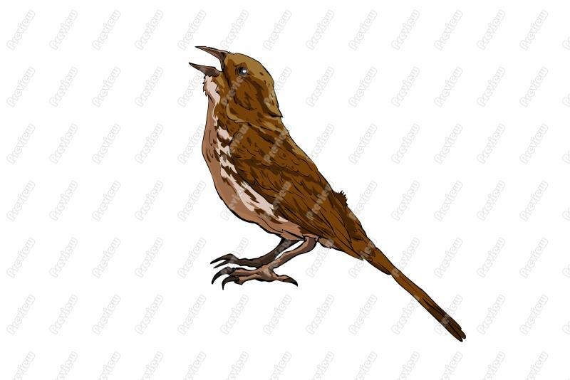 Song Sparrow clipart Cartoon Song Clipart Character Art