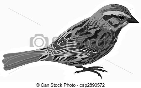 Song Sparrow clipart Csp2890572 of  Sparrow melodia
