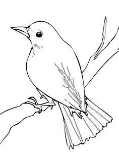 Brds clipart nightingale  nightingale Nightingale Print Bird