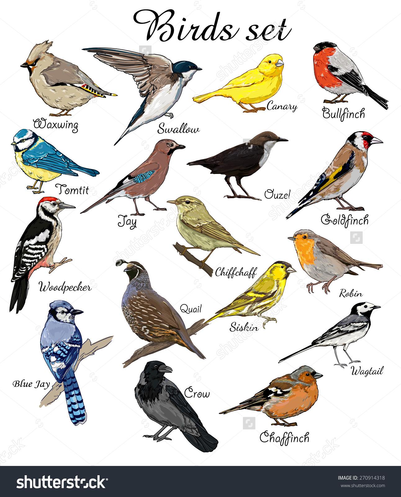 Pigeon clipart air animal Birds bird birds big bird
