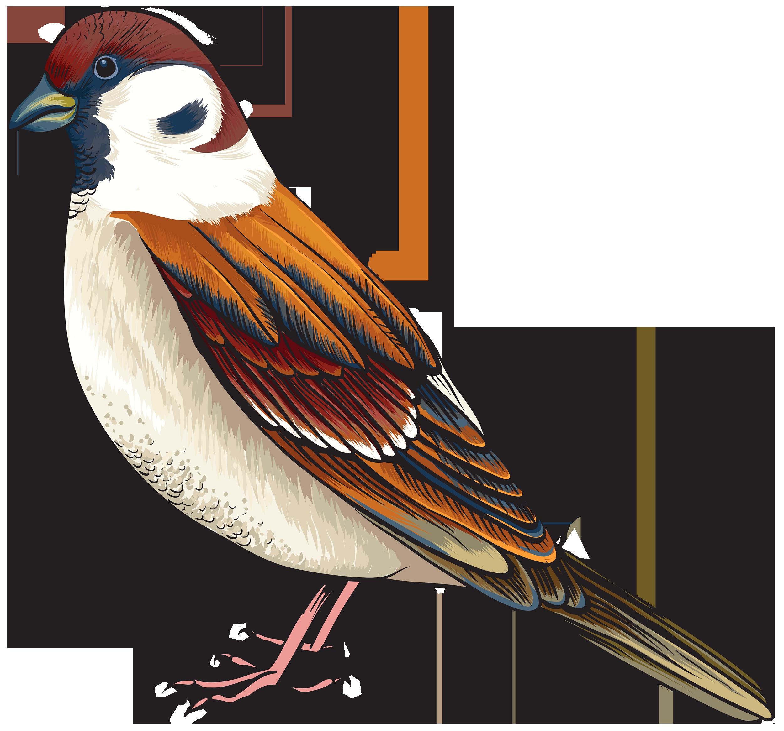 Sea Bird clipart robin #4