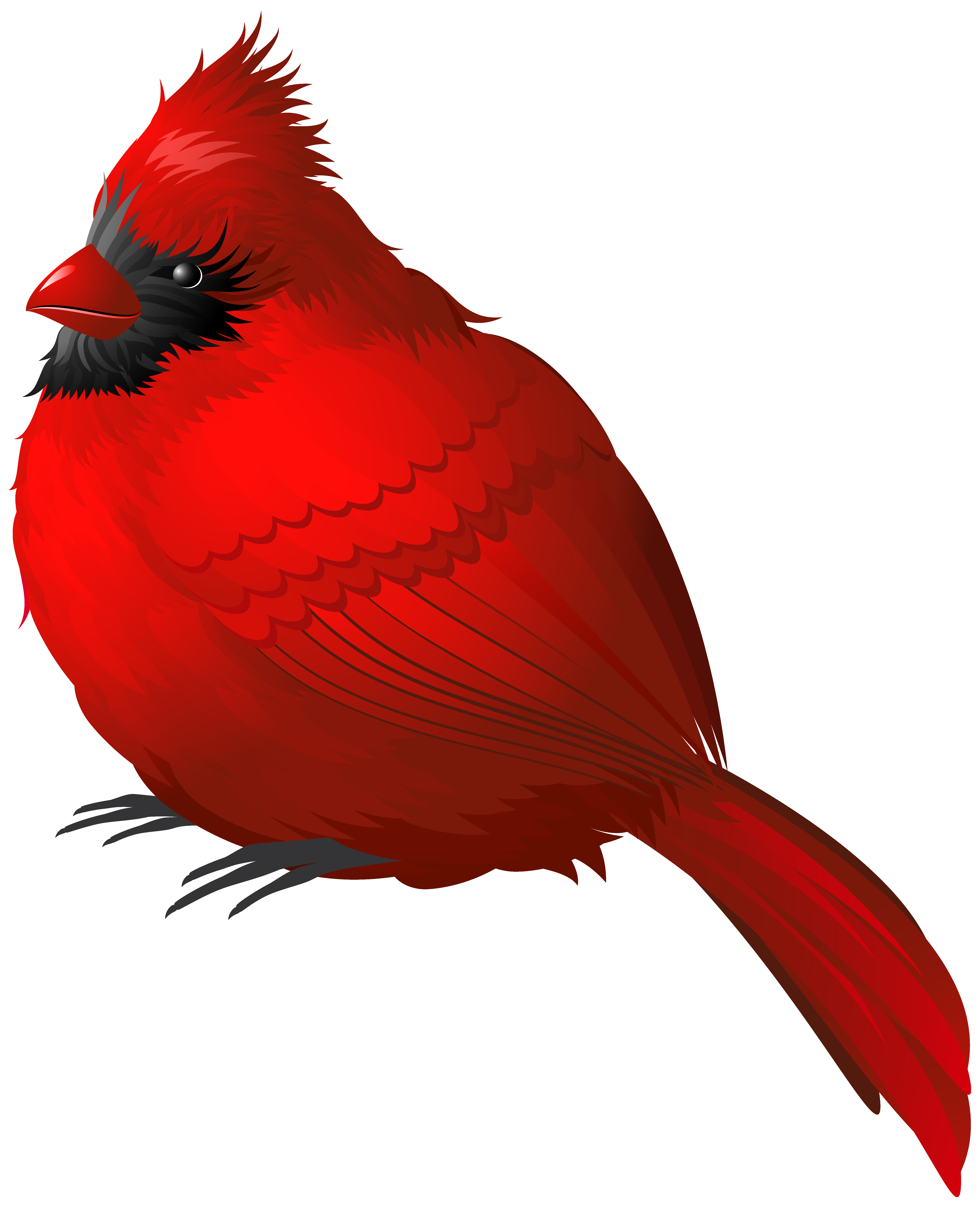 Winter clipart bird Clipart  View Yopriceville PNG