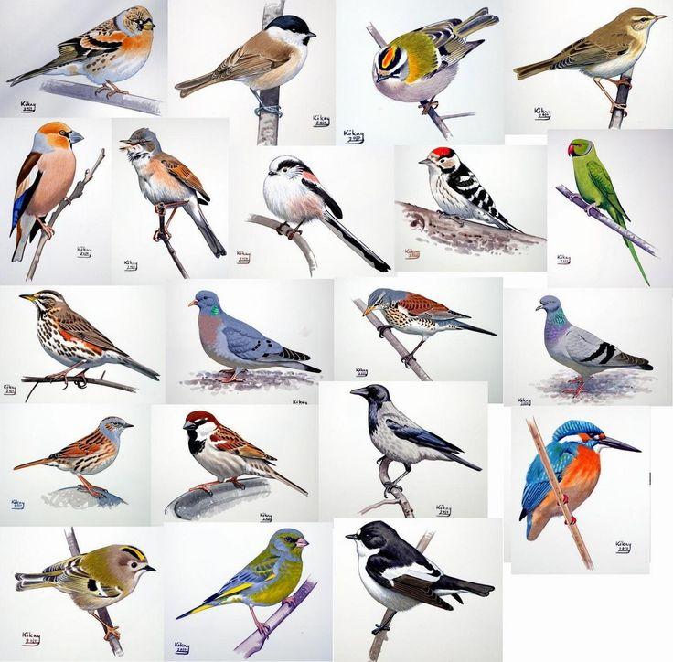 Wildlife clipart songbird Clip best Art & Pin