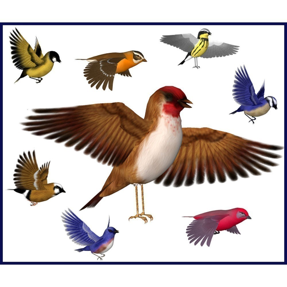 Wildlife clipart songbird Art this Free Songbirds Royalty