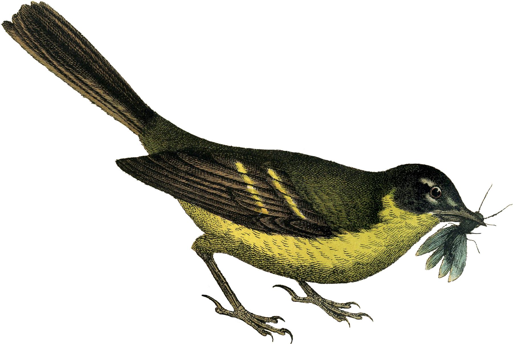 Wren clipart free bird Clip Art Graphics Art! Bird