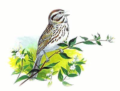 Sparrow clipart Of clipart a Free sparrow
