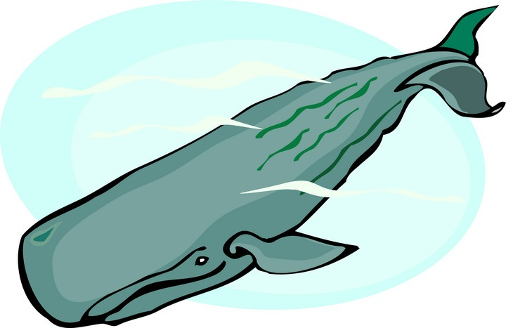 Sperm Whale clipart Sperm%20whale%20clipart Clipart Clipart Images Whale