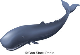 Sperm Whale clipart  and of Sperm Illustration
