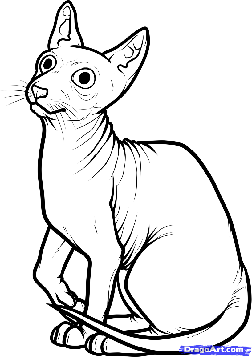 Sphynx Cat clipart Download coloring Cat coloring Cat